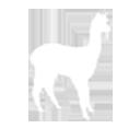 Alpaca veulens